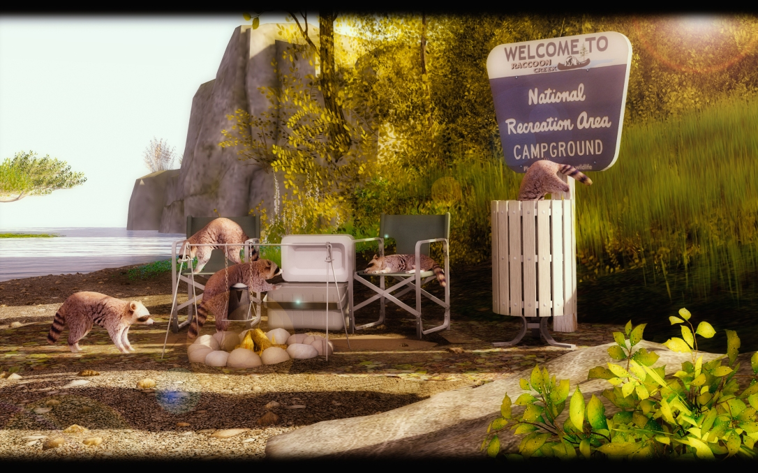 │T│L│C│ Raccoons Campground