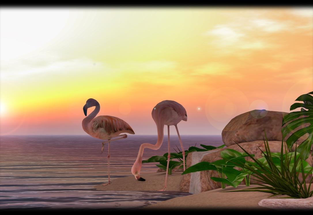 TLC - Flamingos 2