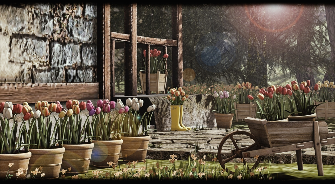 What Next - Tulips