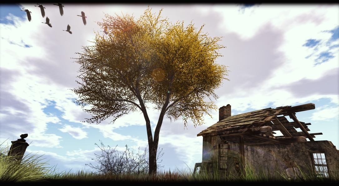Little Branch - Walnut Tree